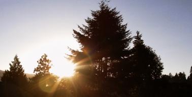 Morning_Sunrise_2